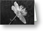 Stamen Greeting Cards - Proud Stamen Greeting Card by Terence Davis