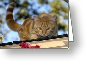 Prowling Greeting Cards - Prowler Greeting Card by David Lee Thompson