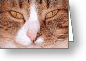 Zsuzsa Balla Greeting Cards - Prudence Greeting Card by Zsuzsa Balla