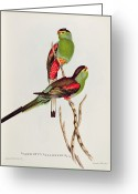 Perched Birds Greeting Cards - Psephotus Pulcherrimus Greeting Card by John Gould