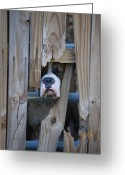 Fence Gate Greeting Cards - Psst Help Me Outta Here Greeting Card by DigiArt Diaries by Vicky Browning