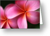 Flowers Of Nature Greeting Cards - Pua Lei Aloha Cherished Blossom Pink Tropical Plumeria Hina Ma Lai Lena O Hawaii Greeting Card by Sharon Mau