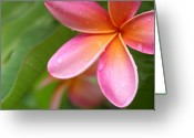 Hawaiian Art Photo Greeting Cards - Pua Melia Earth Heart Greeting Card by Sharon Mau