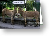 Burro Greeting Cards - Public Toilet Greeting Card by John Greim