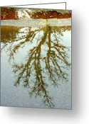 Flooding Greeting Cards - Puddle Reflections Greeting Card by Cindy Wright