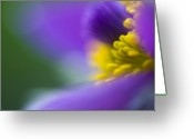 Close Up Greeting Cards - Pulsatilla Greeting Card by Silke Magino