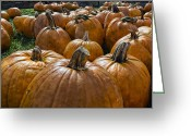 Pumpkin Farm Greeting Cards - Pumpkin Farm Greeting Card by Peter Chilelli
