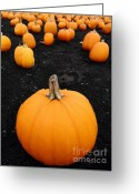 Trick Or Treat Greeting Cards - Pumpkin Patch 5 Greeting Card by Wingsdomain Art and Photography