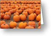 Farmers Markets Greeting Cards - Pumpkins Waiting for Homes Greeting Card by Carol Groenen