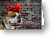 Crazy Greeting Cards - Punk Bully Greeting Card by Christine Till