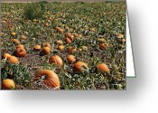Autumn Photographs Greeting Cards - Punkin Patch Greeting Card by Melany Sarafis