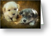 Brown Dogs Digital Art Greeting Cards - Puppies Greeting Card by Svetlana Sewell