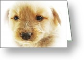 Brown Dogs Digital Art Greeting Cards - Puppy Art Greeting Card by Svetlana Sewell