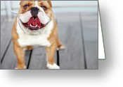 Panting Dog Greeting Cards - Puppy Dog Breed English Bulldog Greeting Card by Maika 777