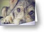 West Virginia Greeting Cards - Puppy Dog Greeting Card by Emily Hall Photography