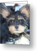 Static Studios Greeting Cards - Puppy Eyes Greeting Card by Static Studios