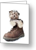 Boot Greeting Cards - Puppy In A Boot Greeting Card by Chad Latta