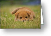 Camera Greeting Cards - Puppy In Grass Greeting Card by Eric Jung