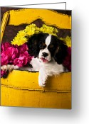 Daisies Greeting Cards - Puppy in yellow bucket  Greeting Card by Garry Gay
