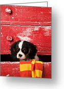 Furniture Greeting Cards - Puppy King Charles CavalierPuppy King Charles CavalierPuppy Ki Greeting Card by Garry Gay