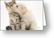 Cross Breed Greeting Cards - Puppy Nuzzles Kitten Greeting Card by Jane Burton