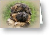 Puppies Greeting Cards - Puppy Portrait II Greeting Card by Sandy Keeton