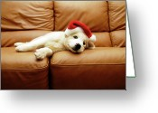 Indoors Greeting Cards - Puppy Wears A Christmas Hat, Lounges On Sofa Greeting Card by Karina Santos