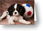 Laying Greeting Cards - Puppy with ball Greeting Card by Garry Gay