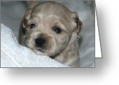 Dog Prints Photo Greeting Cards - Puppys First Bath Greeting Card by Lisa  DiFruscio