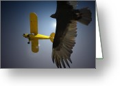 Award Greeting Cards - Pure Flight Greeting Card by Curtis Chapline