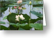 Hare Greeting Cards - Pure Lotus Greeting Card by Vijay Sharon Govender