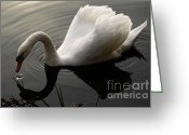 Canada Swan Greeting Cards - Purity Of Spirit Greeting Card by Bob Christopher
