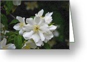 Flowers Pictures Greeting Cards - Purity Greeting Card by Venura Herath