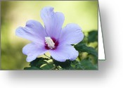 Althea Greeting Cards - Purple Althea Greeting Card by Kenneth Albin