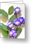 Rose Bushes Greeting Cards - Purple and Blue Tipped Roses Greeting Card by Marsha Heiken