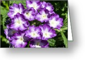 Grand Memories Greeting Cards - Purple and White Bouquet Greeting Card by John Haldane