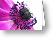 Flower Picture Greeting Cards - Purple Anemone Greeting Card by Angela Doelling AD DESIGN Photo and PhotoArt