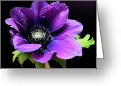 Anemone  Greeting Cards - Purple Anemone Flower Greeting Card by Gitpix