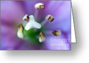 Biologist Greeting Cards - Purple Botanical Greeting Card by Frank Tschakert