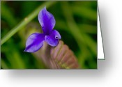 Bromeliad Greeting Cards - Purple Bromeliad Flower Greeting Card by Douglas Barnard