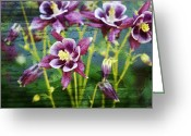 Purple Greeting Cards - Purple Columbines  Greeting Card by Cathie Tyler