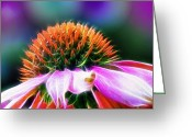 Echinacea Greeting Cards - Purple Coneflower Delight Greeting Card by Bill Tiepelman
