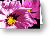 Purple Greeting Cards - Purple Cosmos Greeting Card by Cathie Tyler