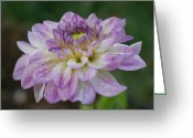Purples Greeting Cards - Purple Dahlia 2 Greeting Card by Ernie Echols