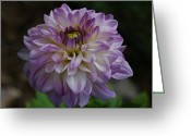 Purples Greeting Cards - Purple Dahlia 3 Greeting Card by Ernie Echols