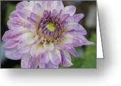 Purples Greeting Cards - Purple Dahlia Greeting Card by Ernie Echols
