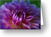 Romantic Floral Greeting Cards - Purple Dream Greeting Card by Lutz Baar