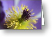 Beauty Mark Greeting Cards - Purple Flower Center Greeting Card by Mark J Seefeldt