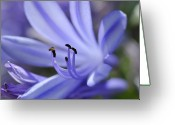Stamen Greeting Cards - Purple Flower Close-up Greeting Card by Sami Sarkis