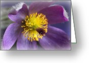 Beauty Mark Greeting Cards - Purple Flower Frosted Greeting Card by Mark J Seefeldt
